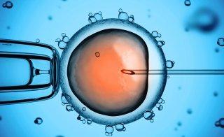 Intracytoplasmatische Spermieninjektion (ICSI)