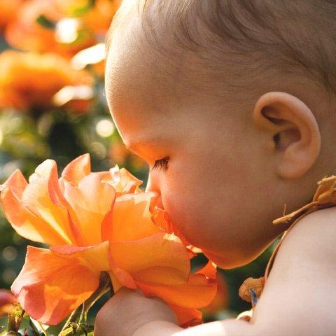 Geruchssinn des Babys: Vertraute Gerüche beruhigen
