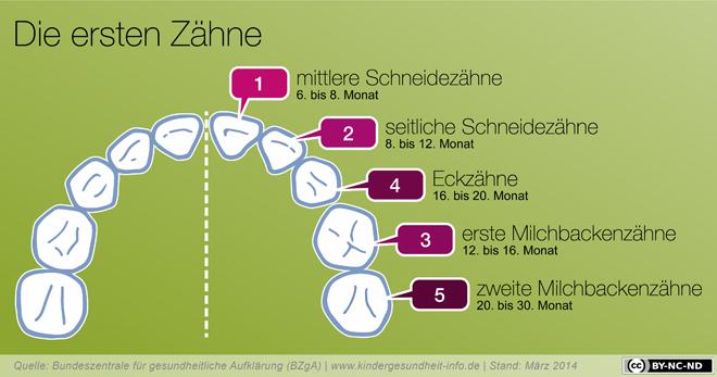 Infografik zu den ersten Zähnen